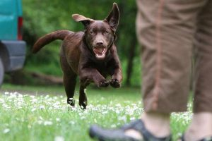 How to Train a Dog to Come