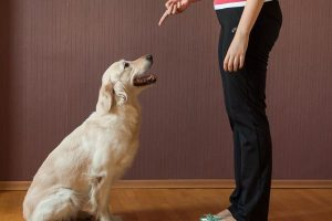 How to Train a Dog to Come at home