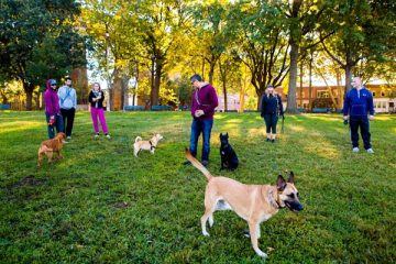 Best of New York Dog Parks
